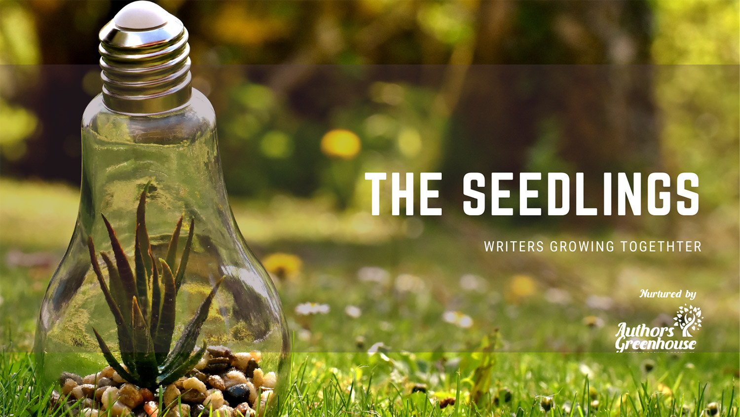 The Seedlings: Writers Growing Together
